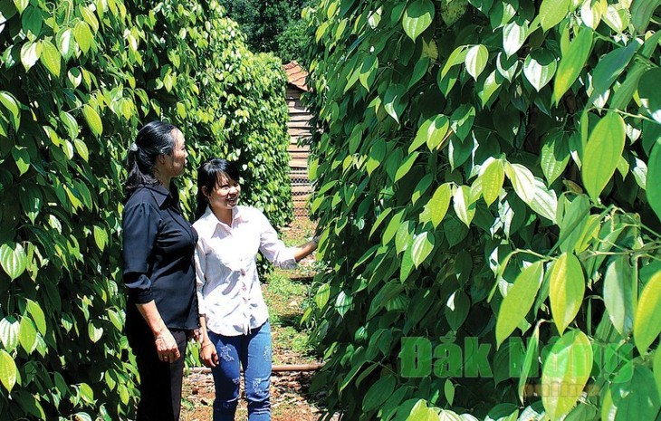 Commodity exchange offers opportunities for Vietnamese farm produce - ảnh 1