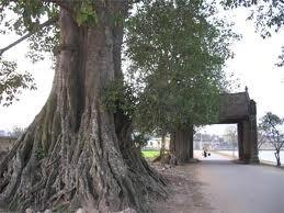 歴史あるドゥンラム村の観光 - ảnh 1