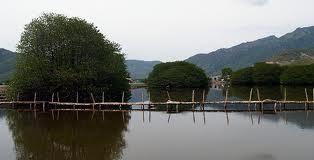 カインホア省マングローブ林の観光 - ảnh 2