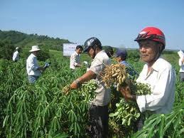 中部フーイエン省の新農村作り - ảnh 1