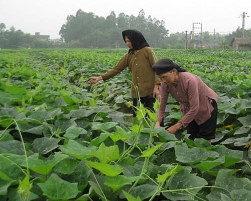 ズン首相、ベトナム農業に競争力と効果向上へ - ảnh 1