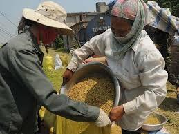 ベトナム、世界食糧デーに応える - ảnh 1