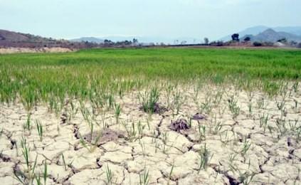 米越・気候変動対応に関するパートナー関係で共同声明を発表 - ảnh 1