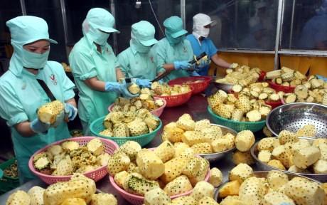 ベトナム、農産物などの輸出を促進 - ảnh 1
