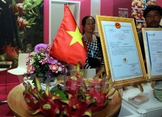 ベトナムドラゴンフルーツ、ベルリンのフルーツロジスティカでPR - ảnh 1