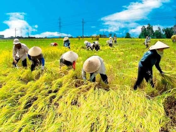 为越南加入《跨太平洋伙伴关系协定》后实现九龙江平原地区稳步发展做好准备 - ảnh 2