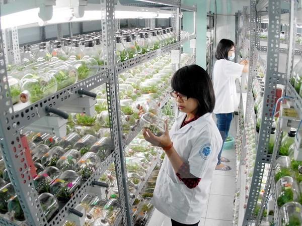 越南胡志明市与美国萨克拉门托市加强人力资源培训合作 - ảnh 1