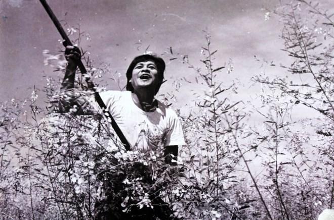 印度电视台首次播出越南电影 - ảnh 1