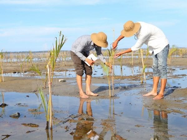 越南主动、积极参加东盟环保合作 - ảnh 1