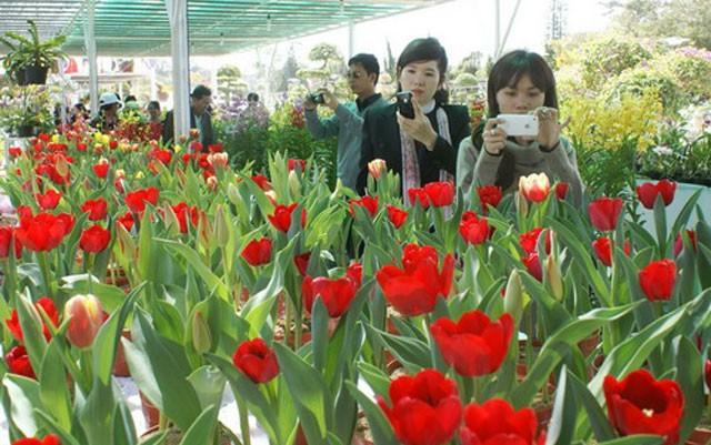 日本公司计划在越南大叻投资种植出口鲜花 - ảnh 1