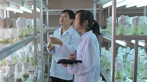 Sampai 2015, semua provinsi dan kota mempunyai pusat penerapan kemajuan  ilmu pengetahuan dan teknologi - ảnh 1
