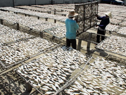 Vietnam's fisheries exports target US$6.5 billion revenue this year - ảnh 1