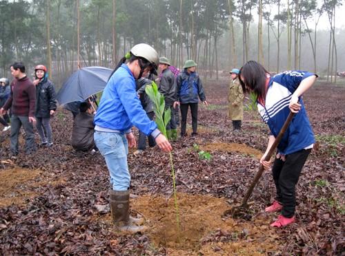 Bewohner in Phu Tho pflanzen Bäume zum Waldanbau - ảnh 1