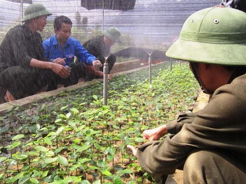 Vietnam will mehr Arbeitsplätze für Jugendliche auf dem Land schaffen - ảnh 1