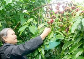 Hilfsprogramme für Gemeinschaft in Tay Nguyen - ảnh 1