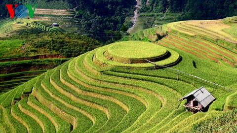 Kultur des Terrassenfeldbaus in nordvietnamesischen Gebirgsregionen - ảnh 1