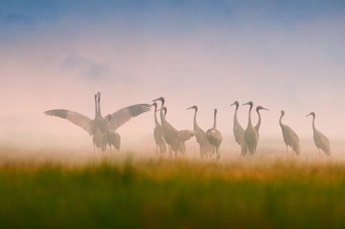 Schöne Landschaftsfotos in der Fotoserie über Kraniche des Fotografen Tang A Pau - ảnh 5