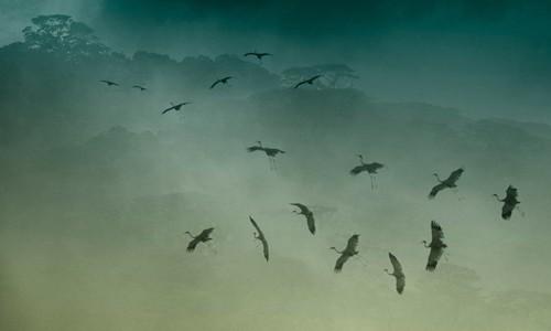 Schöne Landschaftsfotos in der Fotoserie über Kraniche des Fotografen Tang A Pau - ảnh 8