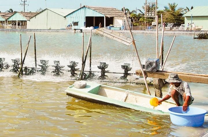 Förderung der Garnelenzucht zur Anpassung an den Klimawandel - ảnh 1