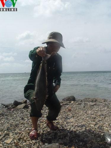 Catching amberjacks on Truong Sa islands - ảnh 2