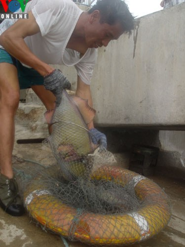 Catching amberjacks on Truong Sa islands - ảnh 5