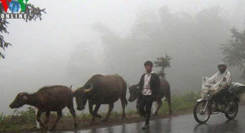 Sapa in freezing cold weather - ảnh 6