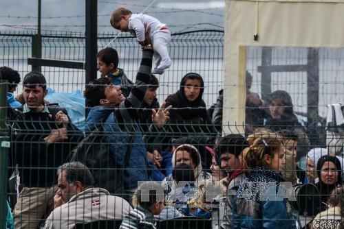 """意大利担忧欧盟和土耳其实施难民交换协议将给其带来""""重负"""" - ảnh 1"""