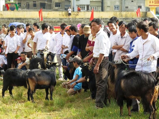 独特的穆庚寨传统斗山羊 - ảnh 5