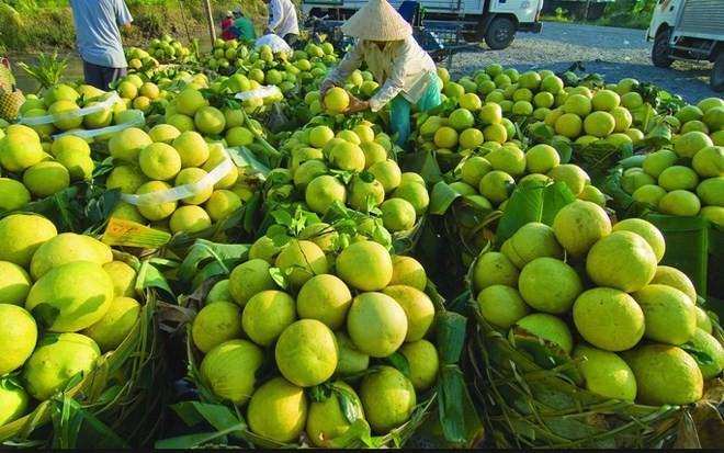 Bekannte Früchte in Obstgärten im Südwesten - ảnh 12