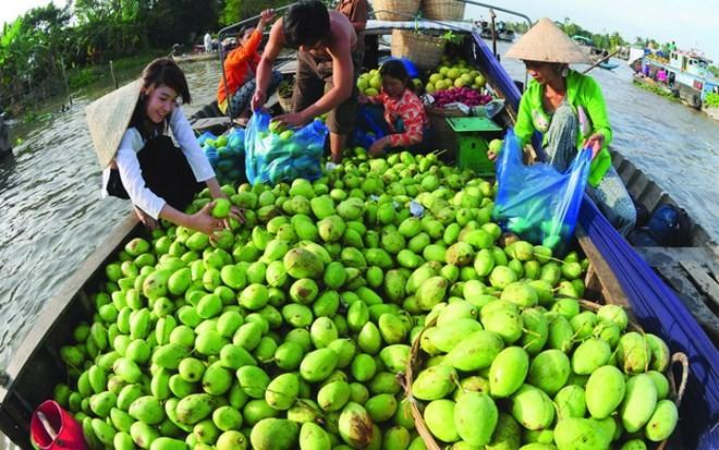 Bekannte Früchte in Obstgärten im Südwesten - ảnh 7