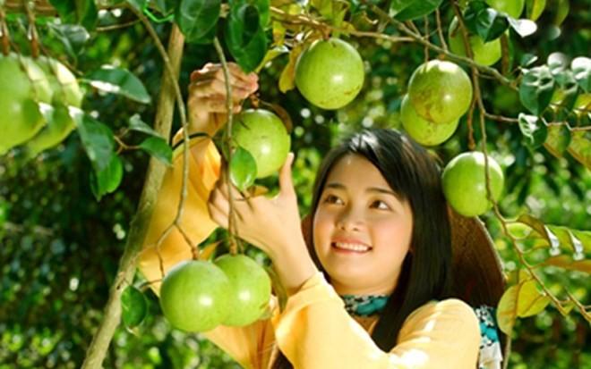 Bekannte Früchte in Obstgärten im Südwesten - ảnh 9