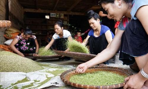 Junger Reis (Com) in nordwestlicher Bergregion - ảnh 2