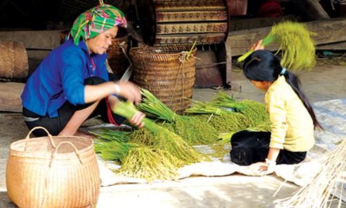 Junger Reis (Com) in nordwestlicher Bergregion - ảnh 1
