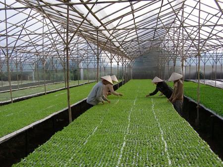 Anwendung der Hochtechnologie in der Landwirtschaft im Hochland Tay Nguyen - ảnh 1