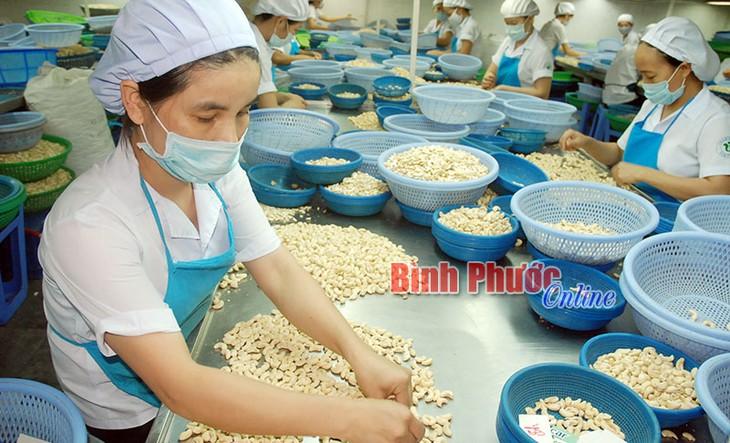 Markenzeichen der Cashewnüsse aus Binh Phuoc nachhaltig fördern - ảnh 1