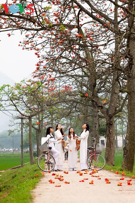 Bunte Bombax ceiba-Bäume in den ländlichen nordvietnamesischen Gebieten - ảnh 14
