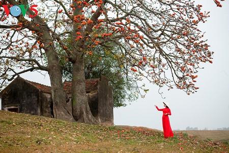 Bunte Bombax ceiba-Bäume in den ländlichen nordvietnamesischen Gebieten - ảnh 3