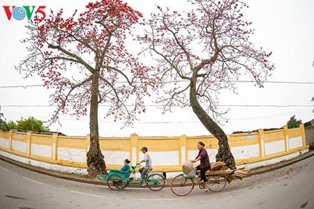 Bunte Bombax ceiba-Bäume in den ländlichen nordvietnamesischen Gebieten - ảnh 7