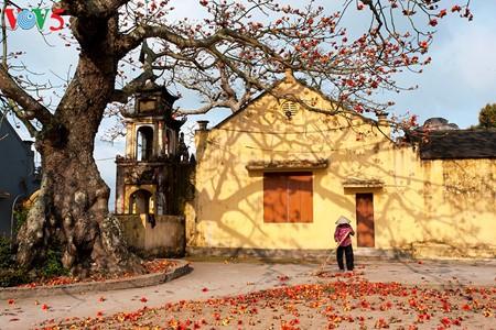 Bunte Bombax ceiba-Bäume in den ländlichen nordvietnamesischen Gebieten - ảnh 8