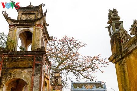 Bunte Bombax ceiba-Bäume in den ländlichen nordvietnamesischen Gebieten - ảnh 10