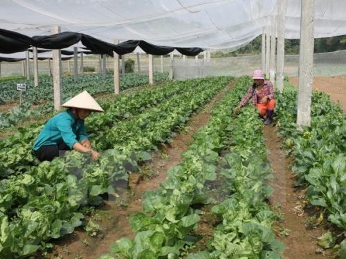 Provinsi Nam Dinh (Vietnam) dan provinsi Miyazaki (Jepang) melakukan kerjasama untuk mengembangkan pertanian - ảnh 1
