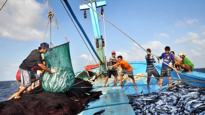 Vietnam dan Thailand memperkuat kerjasama untuk menanggulangi penangkapan ikan ilegal - ảnh 1