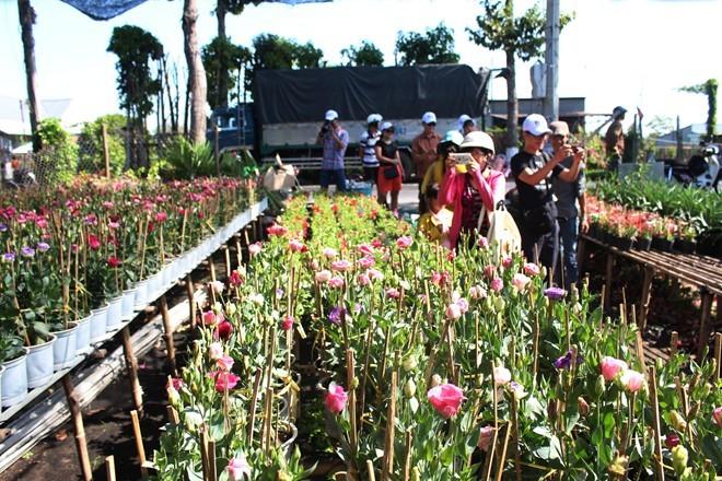 Desa bunga Sa Dec menyerap kedatangan wisatawan sehubungan dengan Hari Raya Tet - ảnh 1