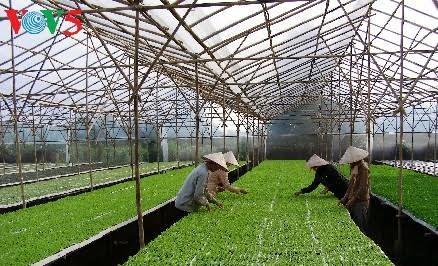 Provinsi Ha Nam mengembangkan pertanian teknologi tinggi - ảnh 1