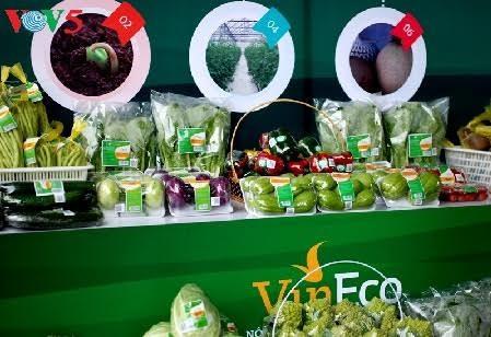 Provinsi Ha Nam mengembangkan pertanian teknologi tinggi - ảnh 2