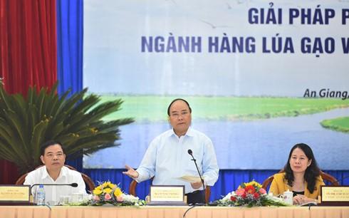 Mengembangkan secara berkesinambungan cabang perberasan daerah dataran rendah sungai Mekong - ảnh 1
