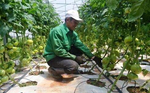 Provinsi Lam Dong menyediakan biaya sebanyak 45 miliar VND untuk membentuk rantai produksi hasil pertanian yang berkesinambungan - ảnh 1