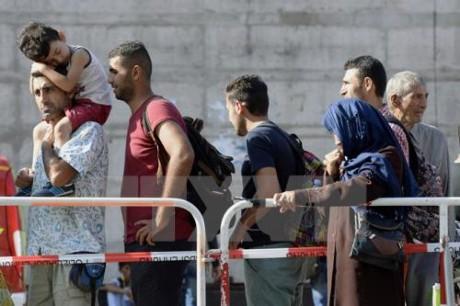 Kanada mengumumkan kuota penerimaan migran - ảnh 1