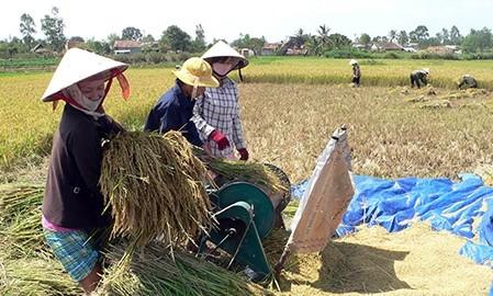 Сохранение площадей под рисом для обеспечения продовольственной  безопасности  - ảnh 1