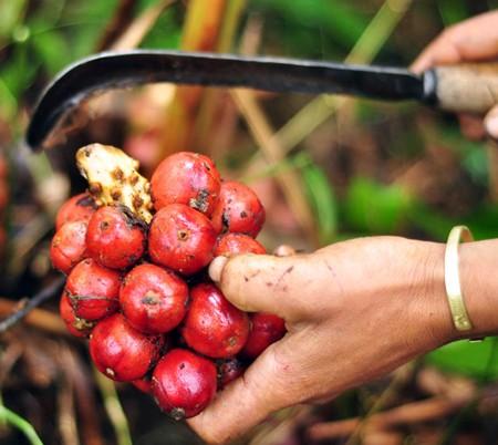 Сезон кардамона в горном районе Нам Канг - ảnh 1